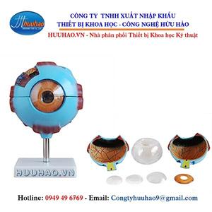 Mô hình mắt phóng đại