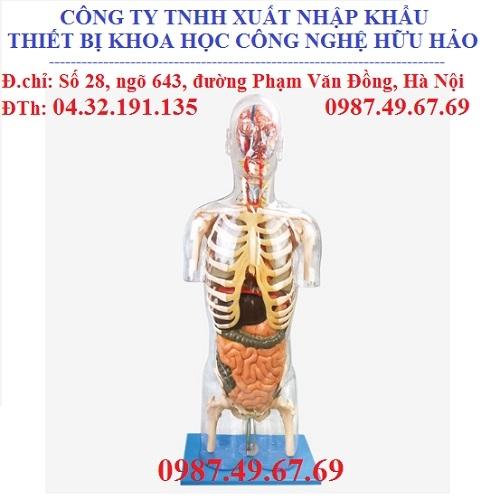 Mô hình nội tạng người
