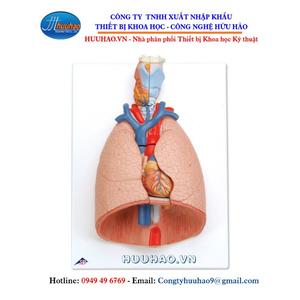 Mô hình phổi người với thanh quản, 7 phần