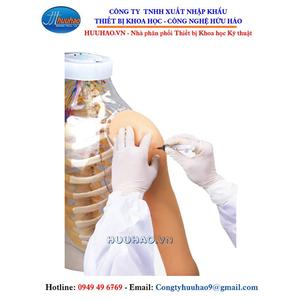 Mô hình tiêm bắp tay trong suốt