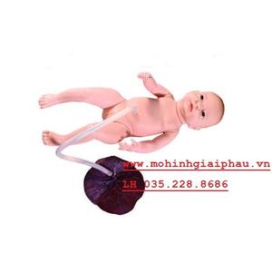 Mô hình trẻ sơ sinh bánh rau