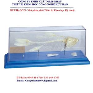 Mô hình xương cá