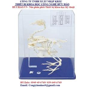 Mô hình xương chim bồ câu