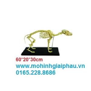 Mô hình xương chó