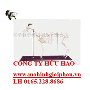 Mô hình xương cừu