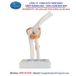 Mô hình xương khớp khuỷu tay