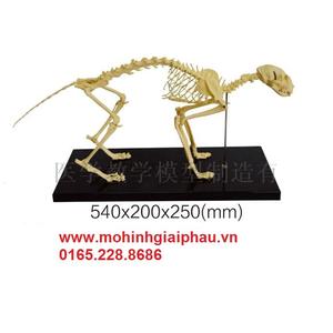 Mô hình xương mèo