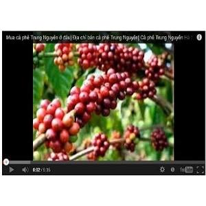Một số thông tin về sản phẩm cà phê Trung Nguyên