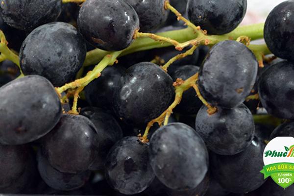 Nho đen k hạt Úc nhập khẩu