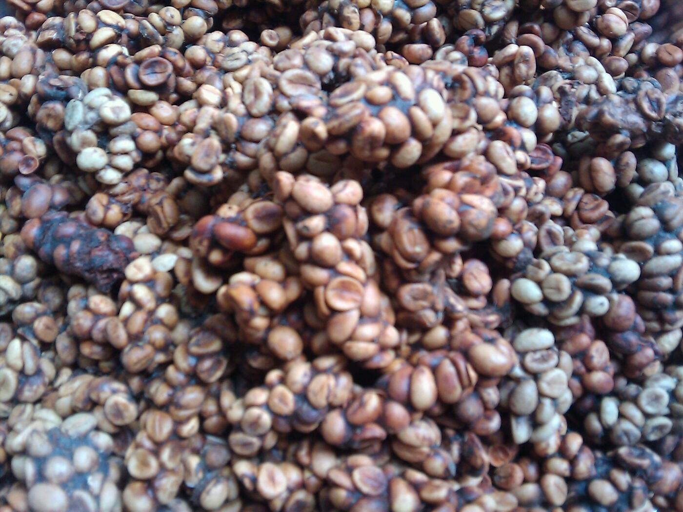 Cafe chồn tự nhiên bao nhiêu 1kg