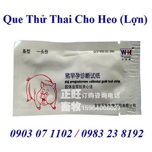 Que thử thai cho heo (Lợn)