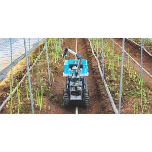 Rô bốt thu hoạch rau
