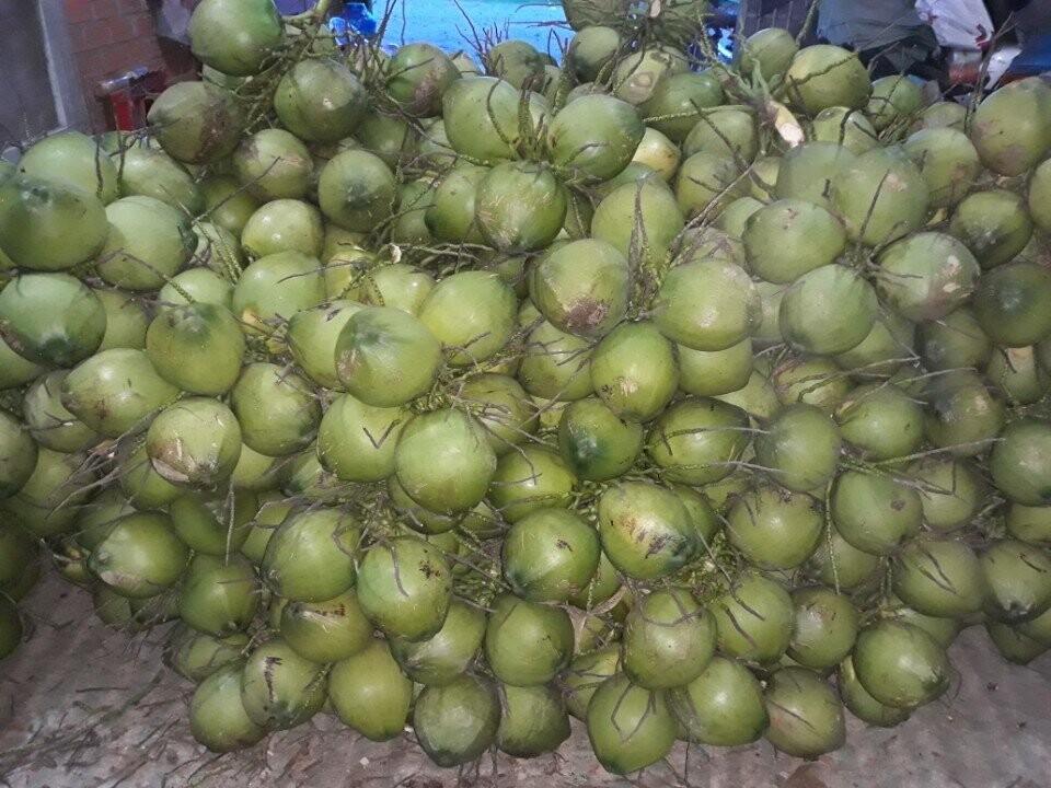 Sản phẩm rượu dừa - Dừa tươi khô