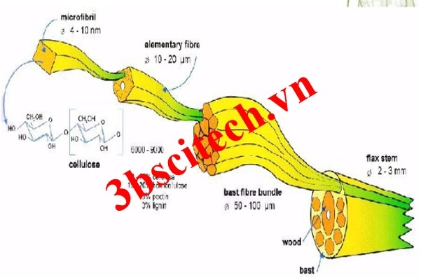 Sợi lanh linen dưới kính hiển vi