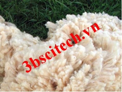 Sợi len wool dưới kính hiển vi