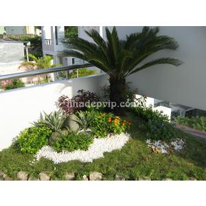 Tiểu cảnh sân vườn mẫu SV05