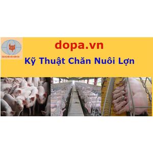 Tổng Hợp Video Kỹ Thuật Chăn Nuôi, Phòng Trị Bệnh Cho Lợn (Heo)