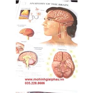 Tranh 3D bộ não người