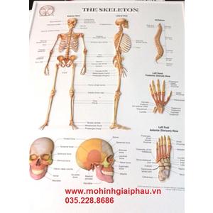 Tranh 3D bộ xương người