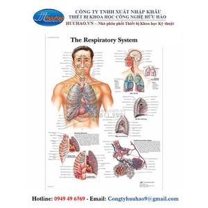 Tranh giải phẫu hệ hô hấp