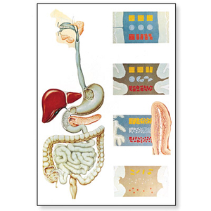 Tranh giải phẫu hệ tiêu hóa