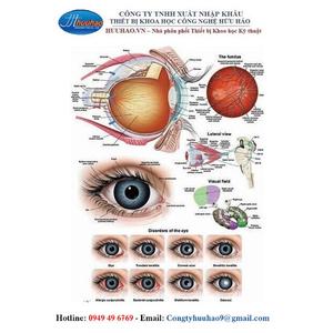 Tranh giải phẫu mắt
