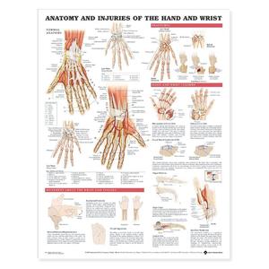 Tranh giải phẫu và những chấn thương thường gặp của bàn tay và cổ tay
