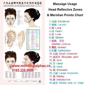Tranh vùng huyệt đạo đầu mặt tai