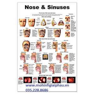 Tranh mũi và xoang mũi