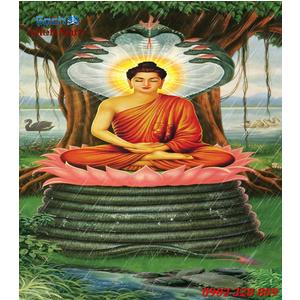 Tranh Phật Thich Ca Mau Ni HP18