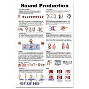 Tranh sound production