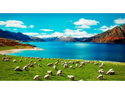 ÚC VS NEW ZEALAND: BẠN THÍCH KANGAROO HAY CỪU HƠN?? (PHẦN 2)